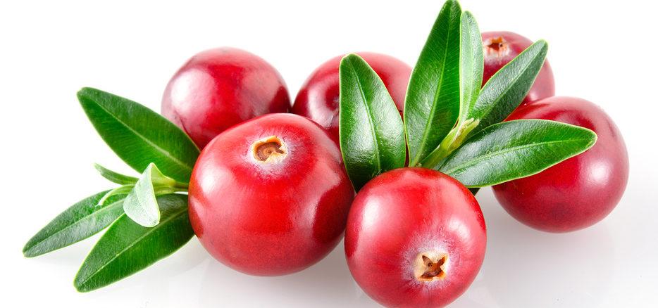 Cranberry Anbau