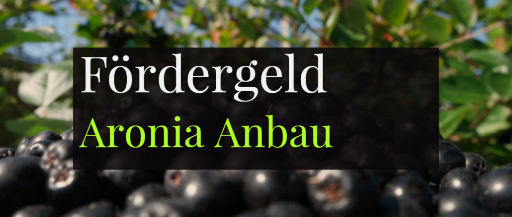 Fördergeld Aronia Anbau